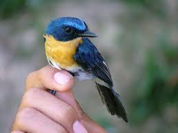 birdinhand