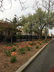 Spring in Brookline