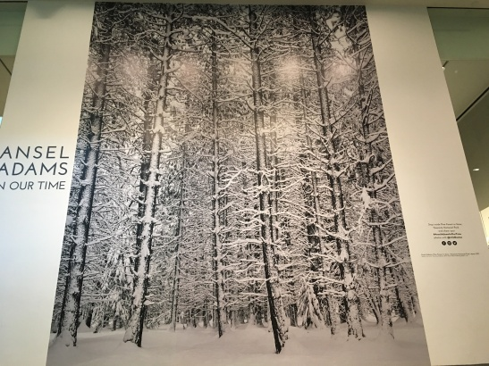 Photo of pine forest in snow by Ansel Adams
